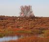 2017_11_0299 (petermit2) Tags: hatfieldmoors hatfield lindholme doncaster southyorkshire yorkshire peat bog humberheadpeatlands humberhead naturalengland nnr