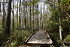 A wooden walkway curves through the woods of the swamp (Monceau) Tags: northlakenaturecenter mandeville louisiana wooden walkway swamp trees