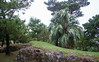 okinawan flora (l e o j) Tags: canon eos kiss x2 rebel xsi 450d japan okinawa naha 沖縄 那覇 shuri castle park trees flora 首里城 公園 首里城公園 木 樹木