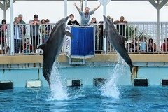 Jump Dolphin Hands (Just Reed) Tags: challengefactorywinner unanimouswinner