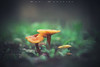 In company (www.studio360fotografia.es) Tags: olympus omd em10 45mm 18 zuiko setas mushroom bokeh desenfoque colores colors fantasia fantasy orange naranja