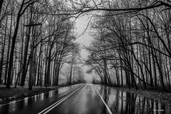 Rainy December Morning. (Igor Danilov Philadelphia) Tags: december rain morning fog mist misty bw mono monochrome blackwhite road trees igordanilov pa flickr google search newtown pennsylvania usa beautiful clean cold reflection pavement roadway ground winter nikon2470mmf28g nikond700 nikondslr tree lines sky