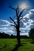 Dead Tree against the Sun (edelweisskoenig) Tags: britain england fuji fujifilm fujinon reisen uk travel xpro1 fujifilmxpro1 23mm 23mmf2 xf23mmf2rwr xf23 xf23mmf2 fujinonxf23mmf2rwr cheshire tree baum serene sun blue sky sonne sonnenschein sonnenstrahlen gegenlicht ray sunray shadow gras grass clouds nature natur outdoor dead tot toterbaum abgestorben