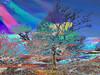 Xor_0002 (troutcolor) Tags: convert imagemagick evaluatesequence