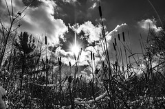 Grasping for Straws (drei88) Tags: solstice winter sun daylight daylength emerging energy cycle darkness departure optimism charged atmosphere clash drama sky earth seasons newyear challenge glimmer hope enthusiasm searching vision imagination cold frozen cattails
