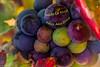 ¡¡FELIZ AÑO NUEVO!! (Charo R.) Tags: feliz año nuevo uvas la rioja canon