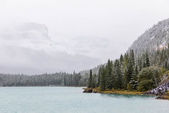 Snow Fall (Kirk Lougheed) Tags: alberta banff banffnationalpark canada canadian icefieldsparkway mountchephren waterfowllakes autumn conifer fall forest lake landscape mountain nationalpark outdoor park sky snow storm tree water