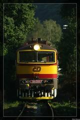 Brum Brum Brum out of the Forest - Skochovice (CZ) 29.08.2015 (Joeri.Mertens) Tags: czech diesel train rail railway railroad