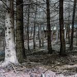 Gleneagles Estate Woodland_G5A7833-1 thumbnail