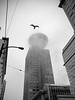 Foggy downtown lunchtime walk (Reva G) Tags: bw blackandwhite downtown vancouver harbourcentre fog cloud winter seymourstreet lookout seagull
