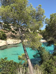 (mikevine87) Tags: water tree playa balearen mallorca shotoniphone iphone7