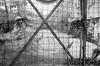 (赤いミルク) Tags: blackandwhite monochrome ビンテージ ビニル black romantism gothic コントラスト 赤 red ウォール wall ゴースト 悪魔 ghost 友人 ドア doors 贈り物 地平線 horizon モノクローム 暗い street 壁 surreal intriguing 生活 life door texture 秋 雨 overpast 賞賛 光 影 白黒 幽霊 いかだ ダンス sky