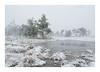 Winter @ Kalmthoutse Heide (jos.pannekoek) Tags: winter winterscape landscape landschap kalmthout d500 nikkor1755f28 rockpaper