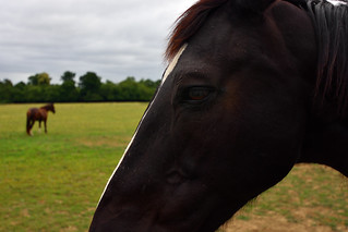 Whispers to an Equine  -  (Selected by GETTY IMAGES)