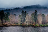 Loch Trool Trees (AlistairJBorland) Tags: atmosphere enchanting leaves loch lochtrool scotland landsape mist