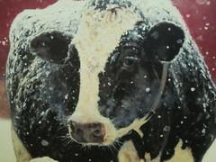 Let it snow ,   Let it  snow,  Let it snow  !!! (excellentzebu1050) Tags: livestock dairycows cattle cow closeup winter christmas christmaswish merrychristmas farm outdoor animal animalportraits coth5