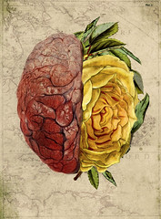 altered: second thoughts (hoolia14oh4) Tags: altered collage art botanical rose yellow brain anatomy vintage