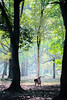 a deer (HarQ Photography) Tags: kipon handevision iberit2475mm sony a7r2 animal nature deer nara park japan