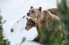 Oh hai (mirri_inc) Tags: winter snow nature nikon sigma