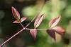 葉 (23fumi@fuyunofumi) Tags: ilce7rm3 sony leaf leaves 55mm aimicronikkor55mmf28s nikon nikkor macro plant 植物 葉 ニコン ソニー
