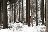 (Pentastar In The Style Of Demons) Tags: canon 5dmk2 ef24105f4 forest mountain girl portrait winter cold snow nature landscape