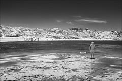 flinders-1239-ps-w (pw-pix) Tags: water beach sand wind sunny warm summer trees dunes cliffs bluff rocks weeds sponges kelp weed damp rockpools shallows woman yukkycakes dog astro standing walking looking happy lowtide shore bw blackandwhite monochrome sonya7 irconvertedsonya7 850nminfrared ir infrared virginia fun nearflinderspier flindersbeach flinders westernport morningtonpeninsula shireofmornington victoria australia peterwilliams pwpix wwwpwpixstudio pwpixstudio