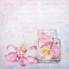 Summer Preserved (Stan Farrow Photography) Tags: stilllife soft texture blur glow bottle flower jar aquilegia text