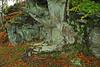Beech Tree chair (eric robb niven) Tags: ericrobbniven scotland dunkeld perthshire walking atholl woods trees