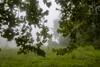 Misty Field (adamopal) Tags: canon canon5d canon5dmkiii canon5dmarkiii mistyfield misty field mist backyard forrest earlymorning morning nature naturewalk green tan grey white black