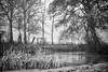 Le chêne et le roseau (Mathieu HENON) Tags: leica m240 noctilux 50mm noirblanc blackwhite nb monochrome france bourgogne saintsauveurenpuisaye mare gel roseaux