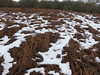 UK - Hertfordshire - Near Berkhamsted - Snow on Northchurch Common (JulesFoto) Tags: uk england hertfordshire ramblers capitalwalkers berkhamsted snow