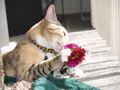 private 030 (lorablong) Tags: westhollywood california cat pet twix