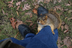 194/365/3481 (December 22, 2017) - Squirrels in Ann Arbor on a Winter's Day at the University of Michigan (December 22nd, 2017) (cseeman) Tags: gobluesquirrels squirrels annarbor michigan animal campus universityofmichigan umsquirrels12222017 winter eating peanut decemberumsquirrel umsquirrel snowsquirrels snow snowy climber squirrelclimber 2017project365coreys yeartenproject365coreys project365 p365cs122017 356project2017