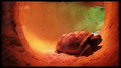 10/26/17 - South Carolina Aquarium, Charleston, SC (Chillycub) Tags: october 2017 vacation trip hdr southcarolina charleston aquarium animals turtles totem
