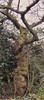 tree (Skunk Monk) Tags: tree winter nikon d3100 nature moss