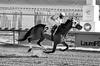 "2017-12-26 (68) r4 Steve Hamilton on #2 Cobh - monochrome (JLeeFleenor) Tags: photos photography ""laurel park"" maryland md ""maryland races"" horse jockey جُوكِي ""赛马骑师"" jinete ""競馬騎手"" dżokej jocheu คนขี่ม้าแข่ง jóquei žokej kilparatsastaja rennreiter fantino ""경마 기수"" жокей jokey người horses thoroughbreds equine equestrian cheval cavalo cavallo cavall caballo pferd paard perd hevonen hest hestur cal kon konj beygir capall ceffyl cuddy yarraman faras alogo soos kuda uma pfeerd koin حصان кон 马 häst άλογο סוס घोड़ा 馬 koń лошадь laurelpark marylandraces races outdoors outside winter cold"