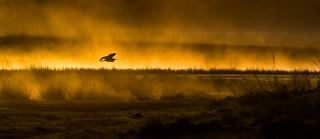 Sunrise..... Grey Heron over water.