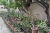 Aloe Collection (Victoria Lea B) Tags: sicily italy aloe palermo succulent ortobotanico