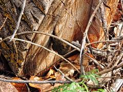 Black Mushroom (berrywine) Tags: mushrooms
