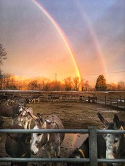 Arcobaleno (Il Rifugio degli Asinelli ONLUS) Tags: asinelli rifugioasinelli ilrifugiodegliasinellionlus donkeys arcobaleno rainbow innamoratidelbiellese
