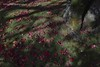Autumn Leaves (_TAKATEN_) Tags: sigma sd quattro foveon sdq autumn