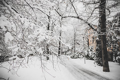White as snow… (Oleg Magni) Tags: snow snowflake snowing white winter winterwonderland lugano switzerland ticino lake neve nature outdoors landscape lago natura svizzera