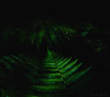 Fern Gully - DSC3317-2 (cleansurf2) Tags: green black square dark fern forest light sony ilce7m2 australia abstract arty minimual minimalism simplicity