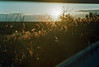 Afternoon on Hobe Mountain (PositiveAboutNegatives) Tags: nikon nikkor rangefinder s2 vintagecmaera 50mm 50mmnikkorf2 film analog agfa vista200 coolscan hobemountain florida sunset lastlight sundown johnathandickinson