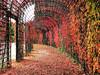 Herbstimpressionen (VenusTraum) Tags: herbst farben color blätter schwetzingen schlossgarten garden fall weg bunt autumn draht spaziergang