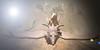 Mistwood Isle-The Haze (Niki Wirefly) Tags: fae fairy fairey faerie male fantasy landscape dragon secondlife wings niki sl