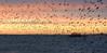 Brighton west pier (Kevin Keatley1) Tags: brighton brightonwestpier kevinkeatley starlings starlingmurmuration sunset westpier sussex coast nikon nikon7200 nikon18200 starlingsoverbrightonwestpi palacepier brightonstarlings murmurations starlingsoverbrightonwestpier
