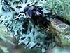 Lichen Macro (ambrknr) Tags: forest woods lichen moss tree nature