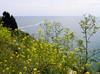 Cape Kaliakra, Bulgaria (cod_gabriel) Tags: bulgaria kaliakra capekaliakra flowers flori sea blacksea mareaneagră theblacksea dobrogea dobruja dobrudja cadrilater capkaliakra българия بلغاريا bulgarien 불가리아 bulgarie bulgária bułgaria bulgarije болгарія βουλγαρία болгария 保加利亚 bulgaristan ประเทศบัลแกเรีย البحرالأسود черноморе sortehavet marnegro 흑해 mernoire zwartezee чёрноеморе svartahavet feketetenger marnero karadeniz 黑海