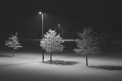 2863 (Keiichi T) Tags: 夜 木 canon tree light eos shadow 夜景 日本 snow 影 6d 冬 雪 night japan 光 winter